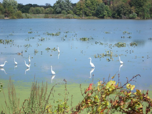 John Heinz nature refuge