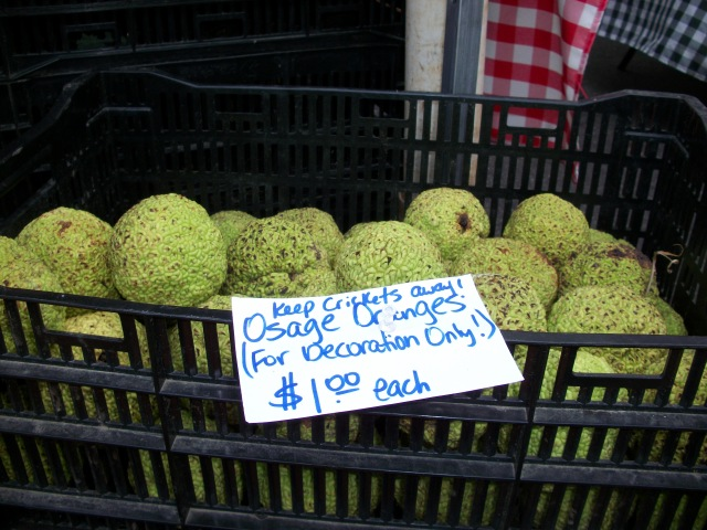 Osage oranges