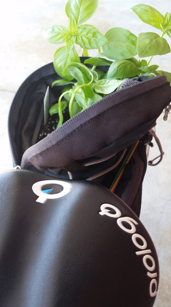 bike and basil