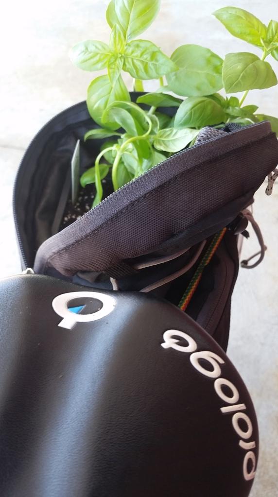bike and basil