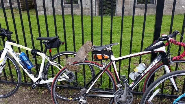squirrel on bike