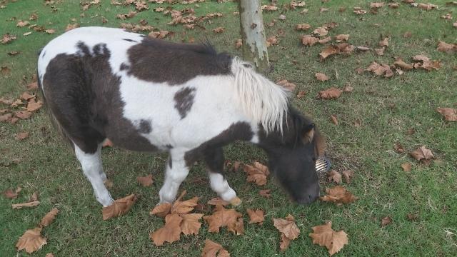 ecg-mini-pony