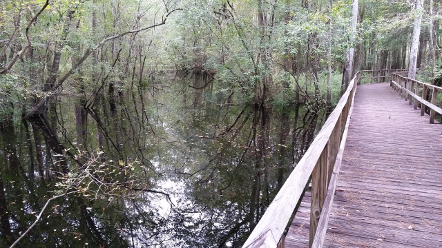 ecg-moores-creek-swamp